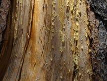 тропка природы Стоковая Фотография