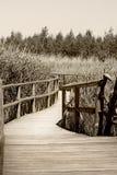 Тропка природы Стоковые Фотографии RF