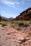 тропка пустыни Стоковое фото RF