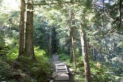 Тропка путя леса Стоковое Изображение
