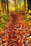 тропка пущи падения Стоковое Фото