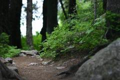 тропка пущи hiking Стоковая Фотография