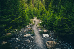тропка пущи hiking стоковые фото