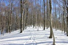 тропка снежка стоковое фото rf