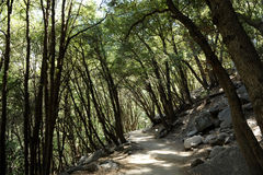 тропка США весен горы manitou падения colorado Стоковая Фотография