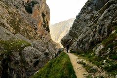 тропка США весен горы manitou падения colorado Стоковое Фото