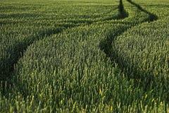 тропка трактора Стоковые Фото