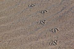 тропка утки Стоковое Фото