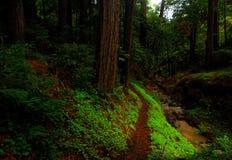 тропка redwood Стоковое Изображение RF