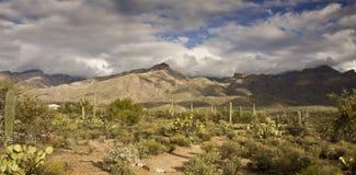 тропка sabino каньона Стоковая Фотография RF