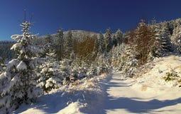 Тропка Snowy Стоковое фото RF