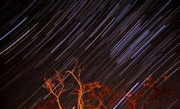 тропки звезды стоковая фотография rf
