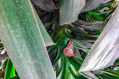 Троповая бабочка среди зеленых цветов Стоковые Фотографии RF