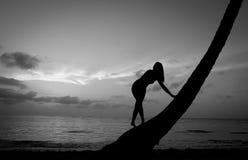 Троповая девушка Стоковая Фотография