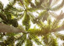 Троповая ладонь, взгляд от земли Стоковая Фотография
