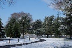 Тропы в древесинах во время wintertime на Bois de Boulogne, около Парижа, Франция стоковое изображение rf