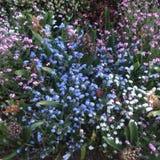 Тропы в летнем времени - Париж полевого цветка, Франция стоковое изображение