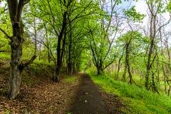 Тропы Марбурга озера в парке штата Codorus в Ганновере, ручке Стоковая Фотография RF
