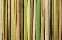 тростники бамбука близкие вверх стоковые фотографии rf
