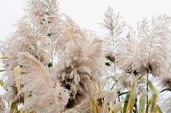 Тростники ветви стоковая фотография rf