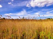 Тростники внутри белой мемориальной зоны природы стоковая фотография