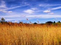 Тростники внутри белой мемориальной зоны природы стоковое фото