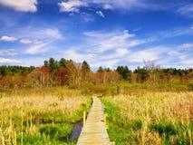 Тростники внутри белой мемориальной зоны природы стоковое фото rf