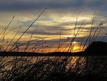 Тростники во время захода солнца над красивым озером с облачным небом в предпосылке стоковое фото rf