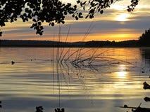 Тростники во время захода солнца над красивым озером с облачным небом в предпосылке стоковое изображение rf