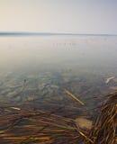 Тростники в воде стоковое фото
