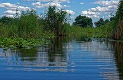 Тростники в канале в перепад Дунай стоковое изображение