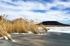 Тростники в льде на озере Balaton, Венгрии стоковое фото rf