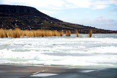 Тростники в льде на озере Balaton, Венгрии стоковая фотография