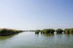 Тростники в озере стоковое изображение rf
