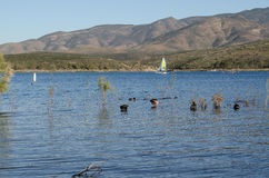 Тростники в озере стоковые изображения rf