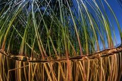 Тростники в пресноводном озере стоковое фото