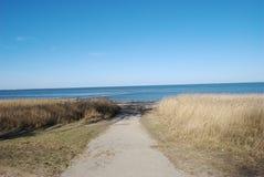 Тростники в прибрежной полосе на острове Sylt стоковые изображения