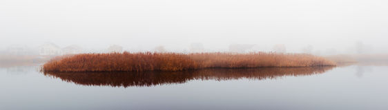 Тростники в тумане Стоковое Изображение