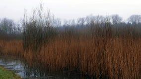 Тростники и болото стоковое изображение rf
