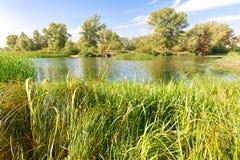 Тростники и деревья в реке Стоковое фото RF