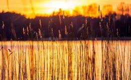 Тростники и заход солнца стоковые изображения rf