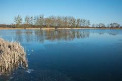 Тростники и лед на озере Деревья на береге отражая в воде стоковые изображения