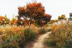 Тростники и листва осени стоковое фото rf
