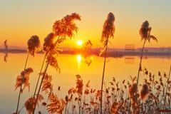 Тростники и масло всасывая берег озера машины Стоковые Фото