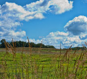 Тростники и небо лета Стоковое Изображение RF