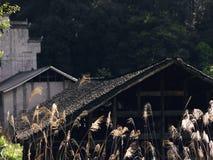 Тростники и дома стоковое изображение