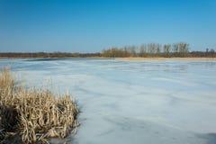 Тростники и снег на береге замороженного озера Деревья на горизонте и голубом небе стоковые изображения