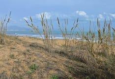 Тростники на береге моря стоковая фотография