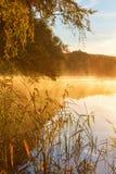 Тростники на крае воды стоковая фотография rf