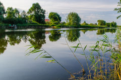 Тростники на озере Стоковая Фотография RF